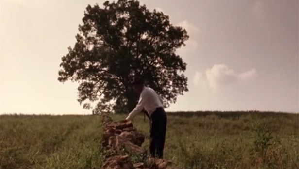 1491838781977 - Oak tree in 'Shawshank Redemption' cut up, hauled away
