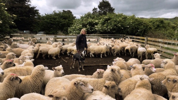 1493684566169 - Cheltenham farmer features in Kiwi MEAT documentary